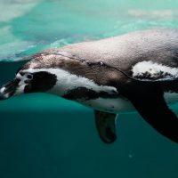 Antartika'da Hangi Hayvanlar Yaşar